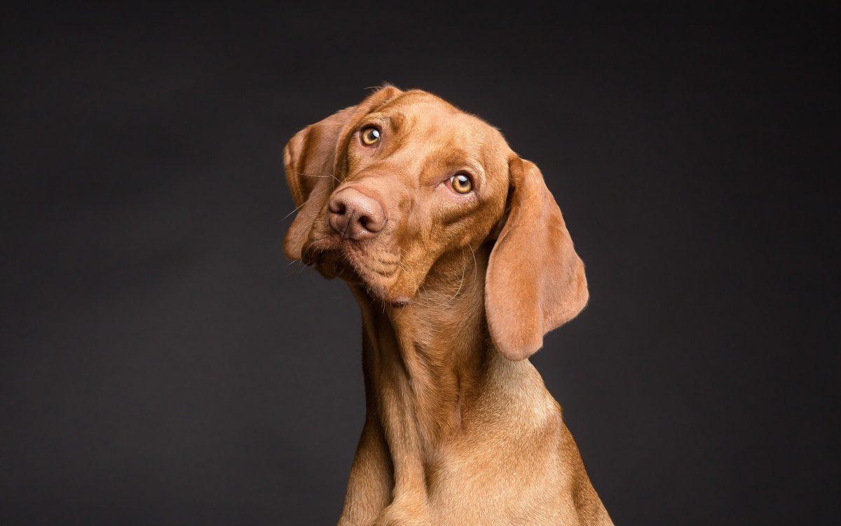 A close up of a dog